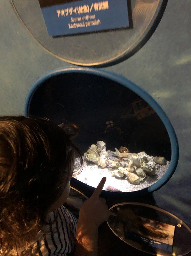 江ノ島水族館キッズコーナーで見れる魚