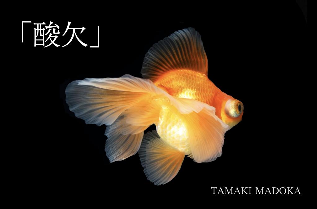 f:id:tamaki_madoka:20181028170706p:plain