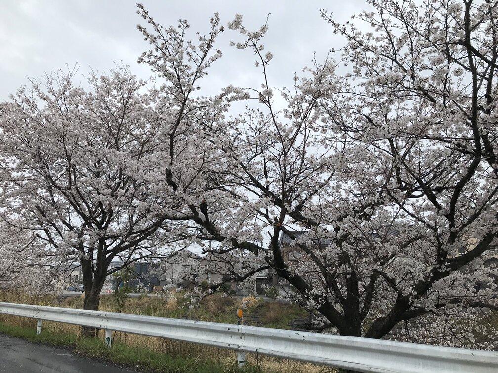 f:id:tamaki_sunny_cloudy:20210417154110j:plain