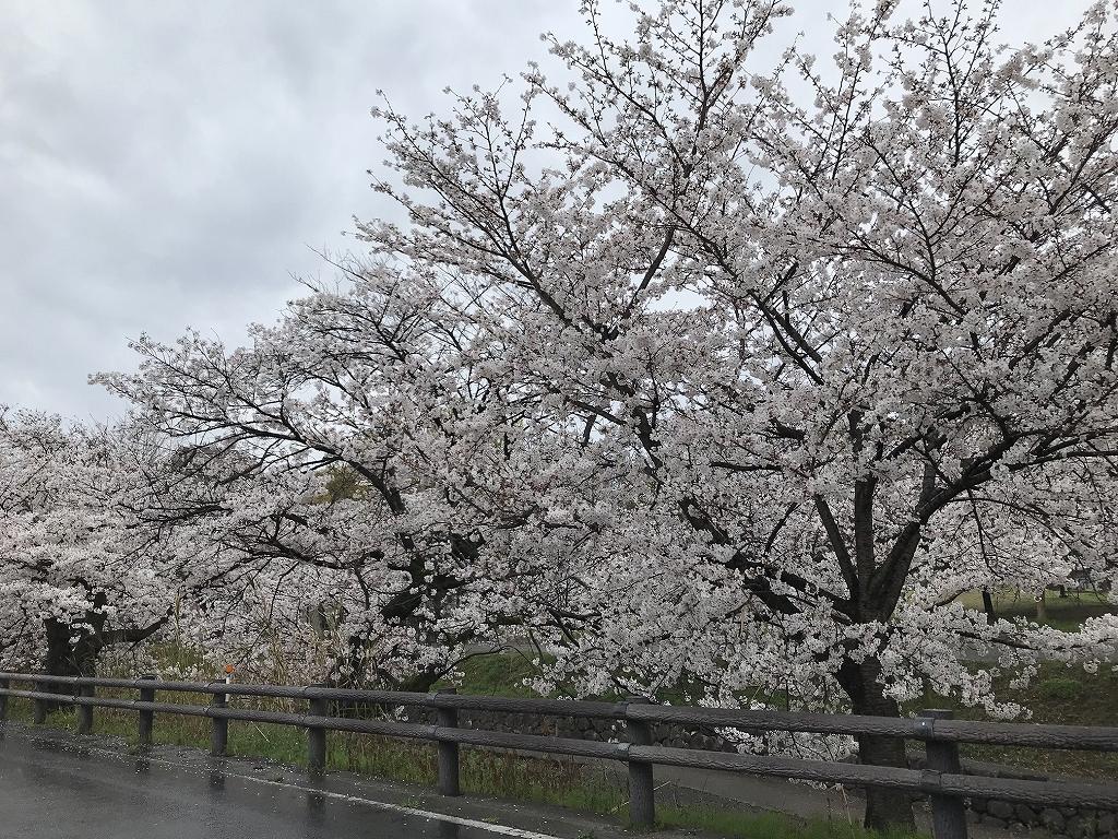f:id:tamaki_sunny_cloudy:20210417154142j:plain