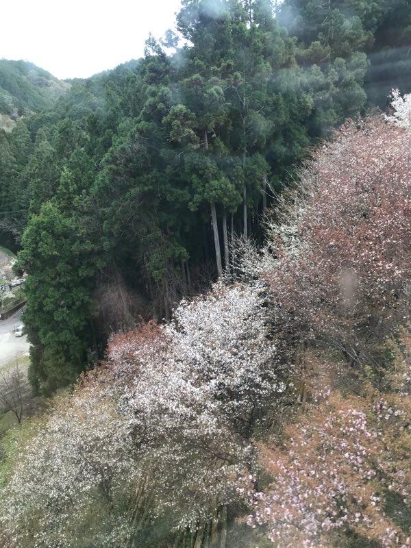 f:id:tamaki_sunny_cloudy:20210429133438j:plain
