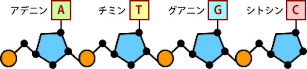 f:id:tamakoro1k:20161226070742j:image