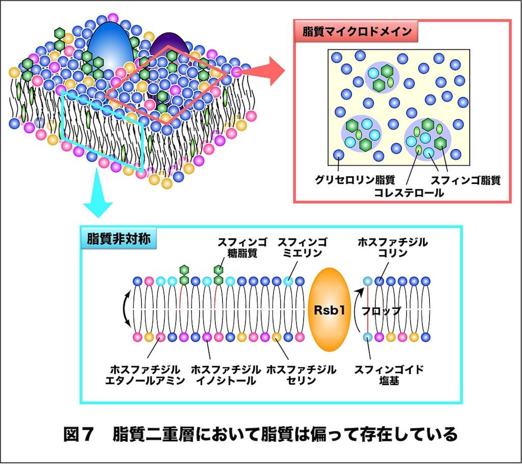 f:id:tamakoro1k:20170130183436j:image