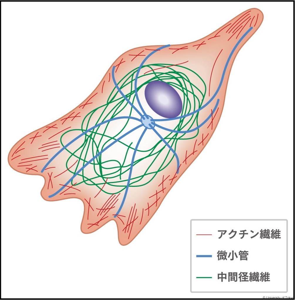 f:id:tamakoro1k:20170216164130j:plain