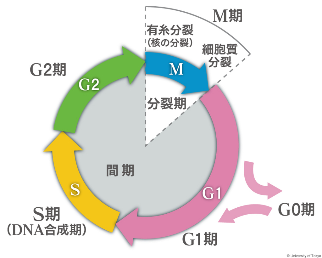 f:id:tamakoro1k:20170318150539j:plain