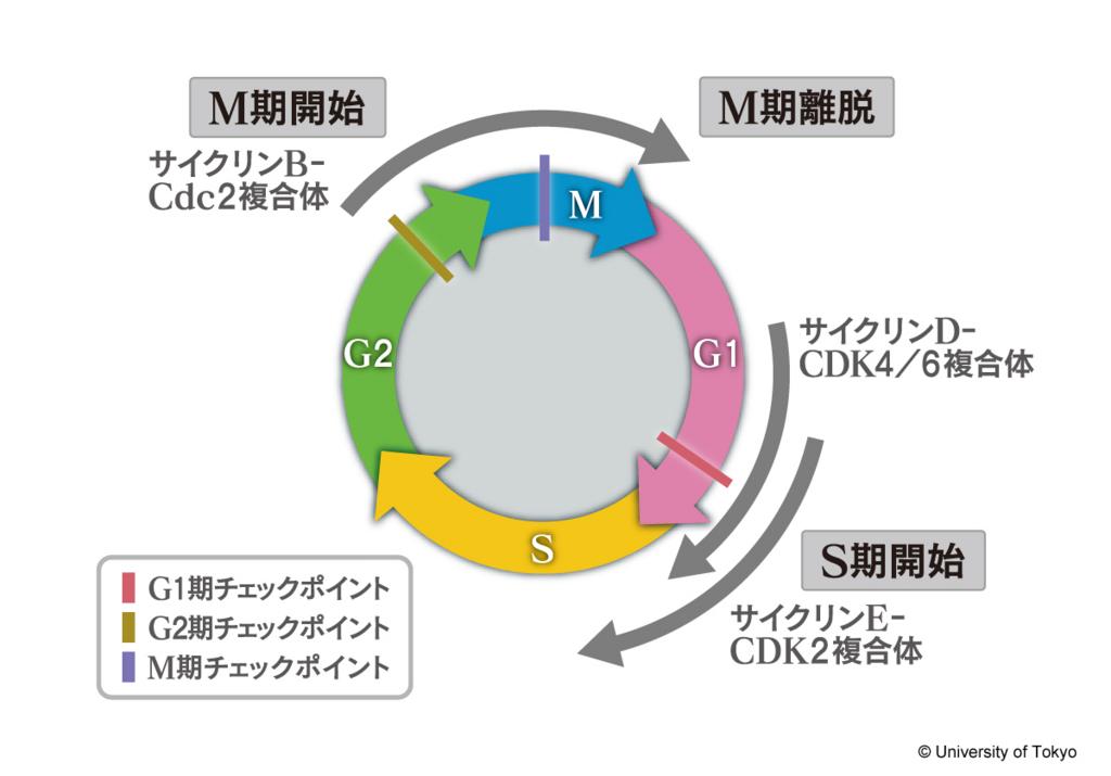 f:id:tamakoro1k:20170322032022j:plain