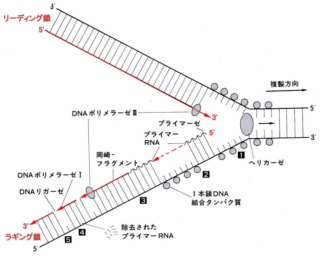 f:id:tamakoro1k:20170721003729j:plain