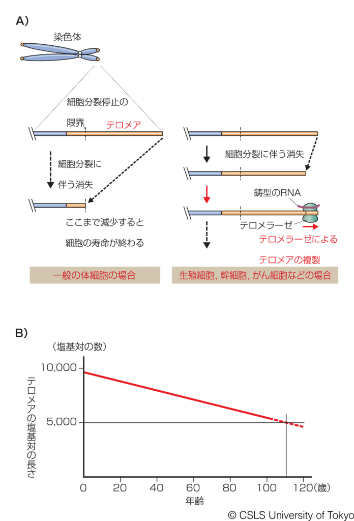 f:id:tamakoro1k:20170727123126j:plain
