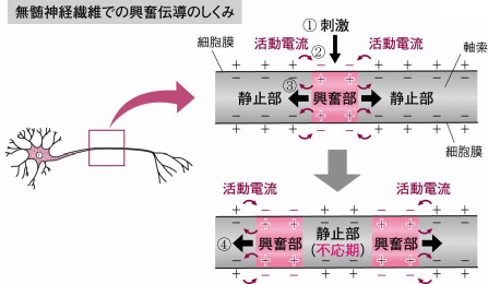 f:id:tamakoro1k:20170815015003p:plain