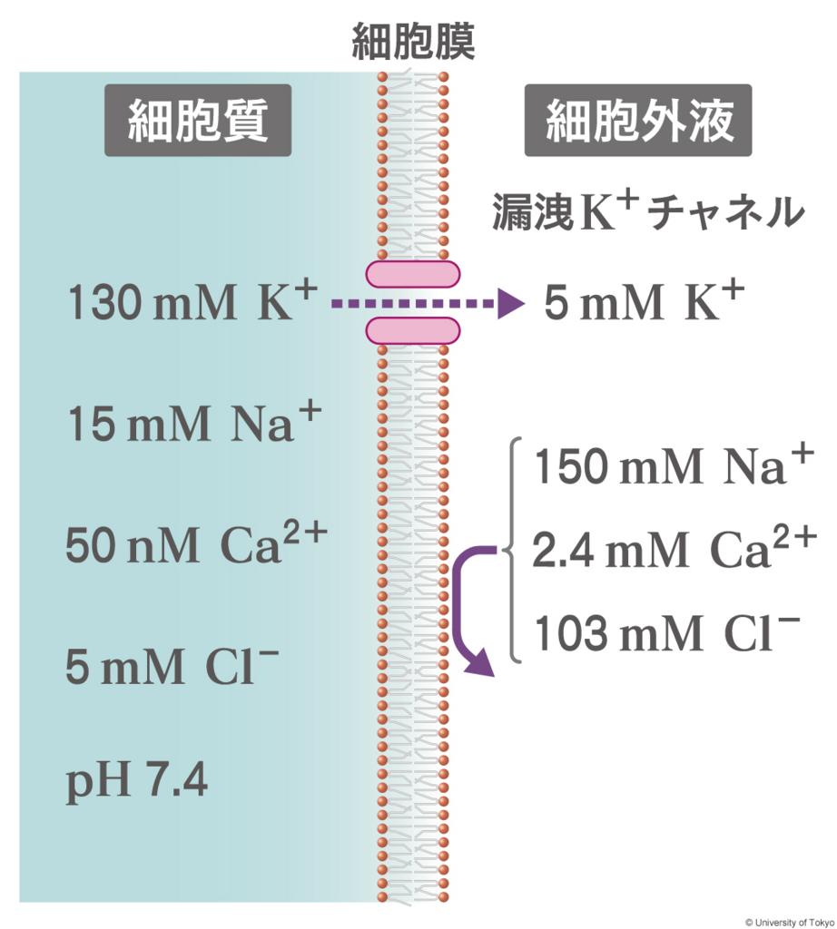 f:id:tamakoro1k:20170822112438j:plain