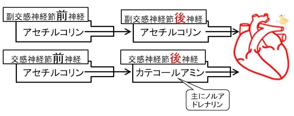 f:id:tamakoro1k:20170829010042j:plain