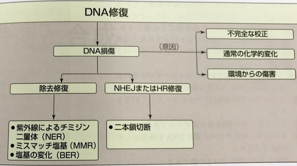 f:id:tamakoro1k:20171003160313j:plain