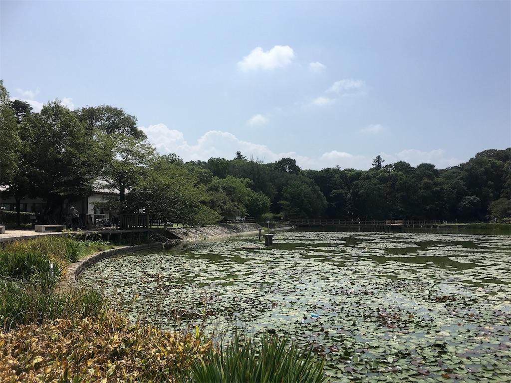 f:id:tamakushi13:20160822031951j:image