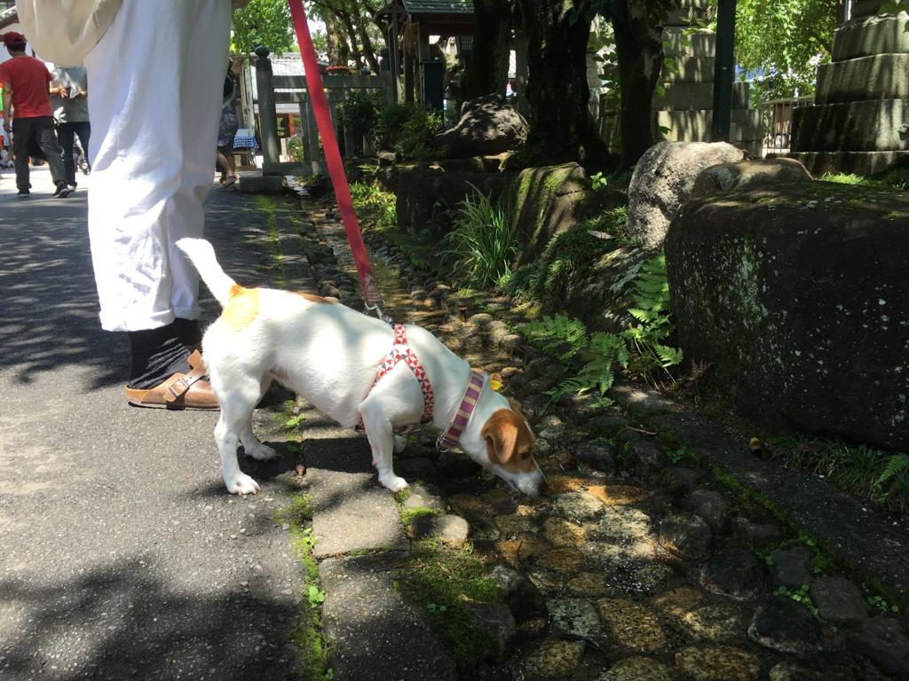 f:id:tamanaosakura:20160630234345j:plain