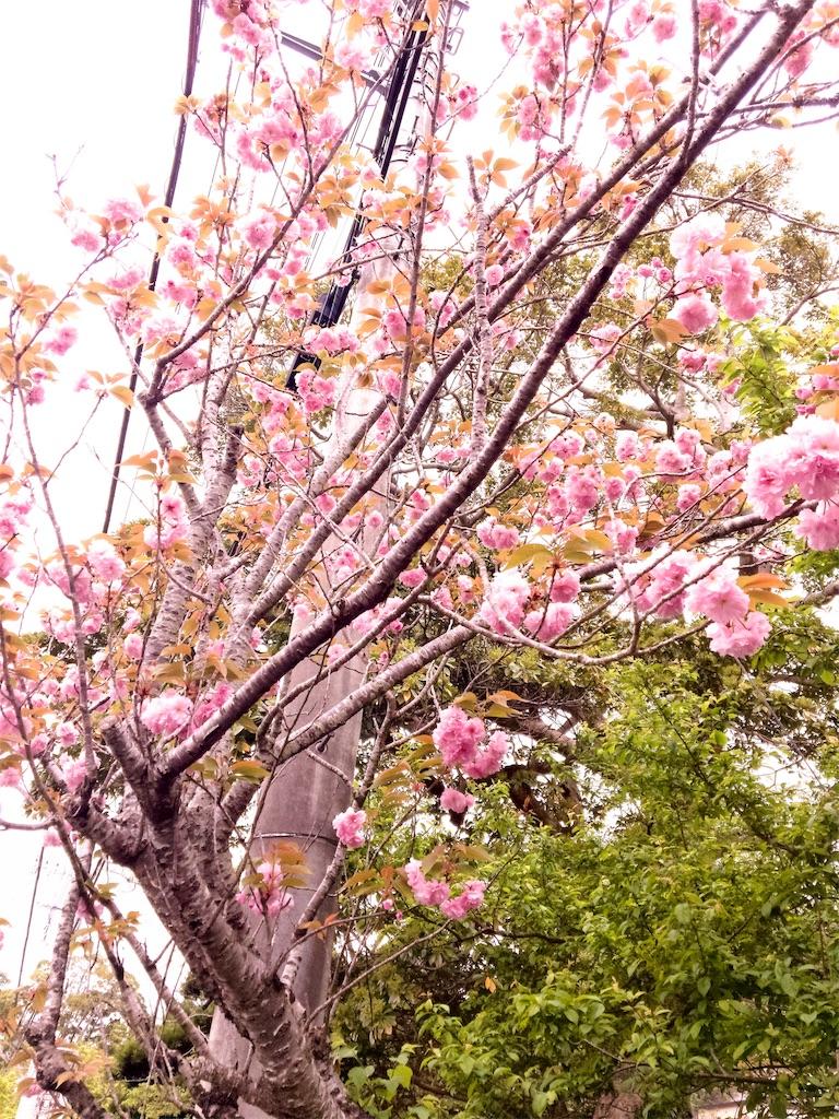 f:id:tamaohioki:20170423233437j:image