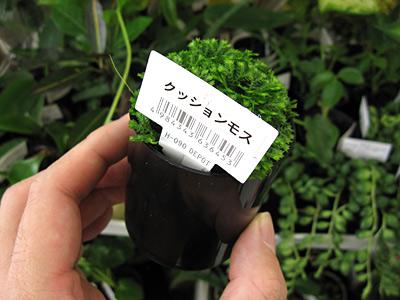 f:id:tamaokiyutaka:20180209002403j:plain