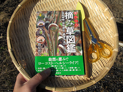 f:id:tamaokiyutaka:20180209025248j:plain