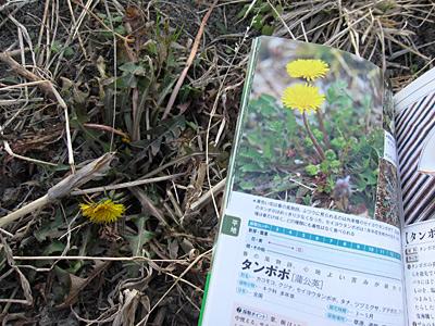 f:id:tamaokiyutaka:20180209025727j:plain