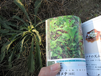 f:id:tamaokiyutaka:20180209030005j:plain