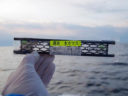 f:id:tamaokiyutaka:20180329020405j:plain