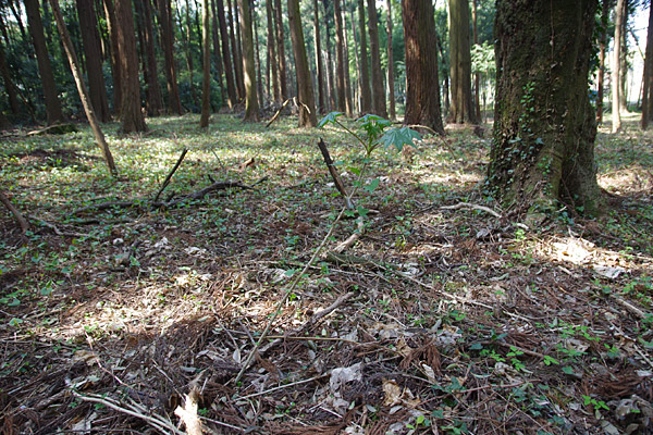 f:id:tamaokiyutaka:20180405040814j:plain