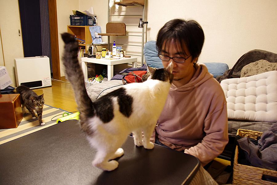 f:id:tamaokiyutaka:20210301203320j:plain