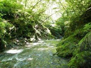 日原川支流・小川谷