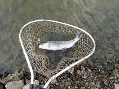 管理釣り場用のネット