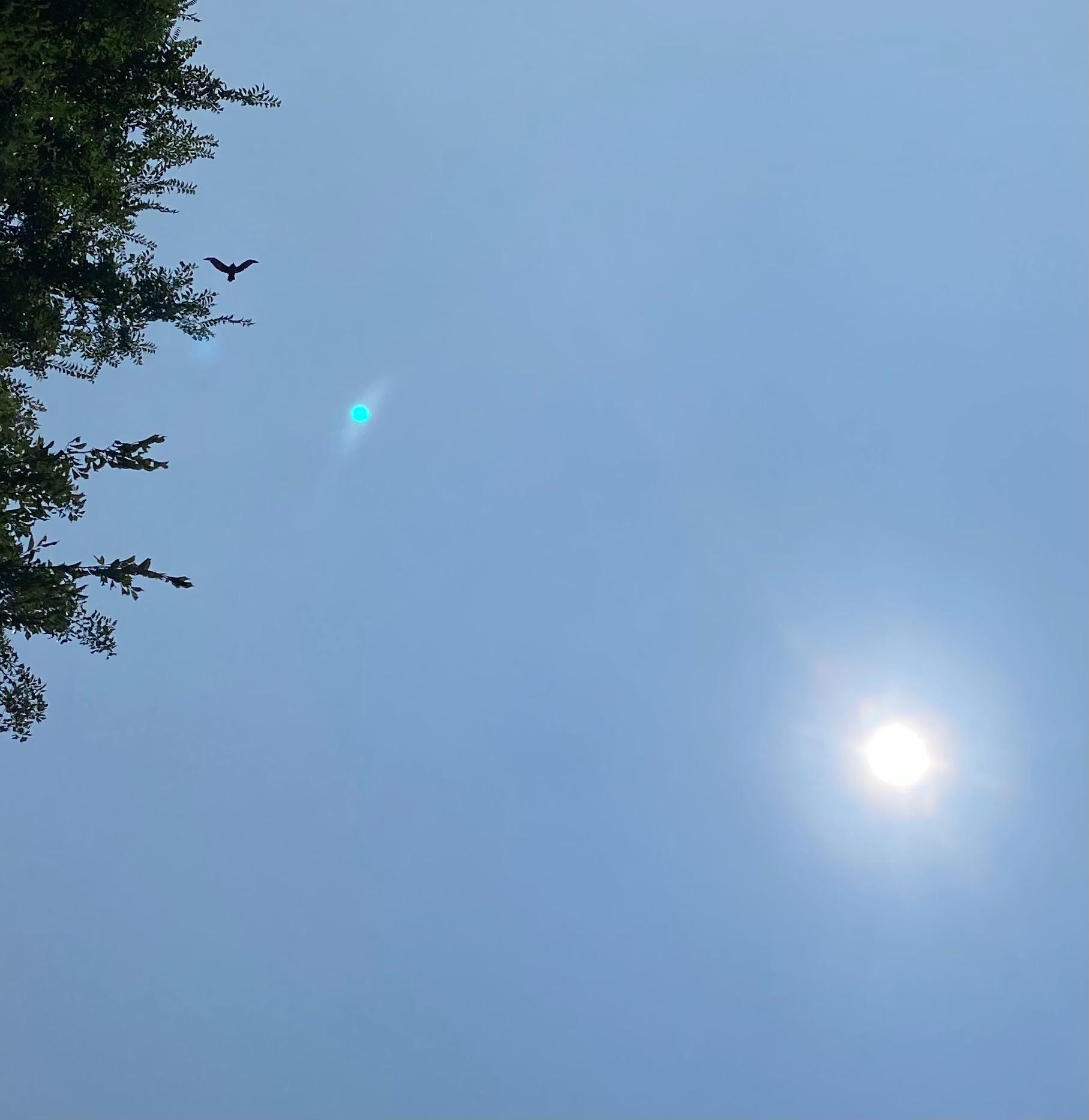 f:id:tamasapuri:20210812201931j:image