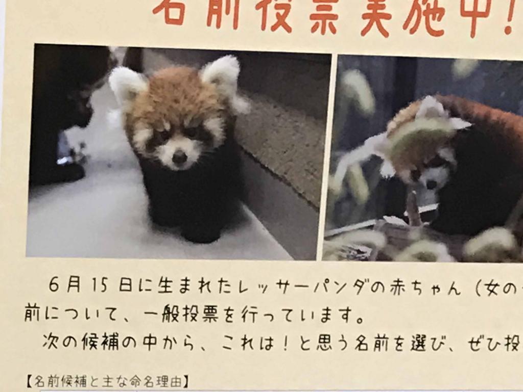 f:id:tamayoshi:20161022195718j:plain