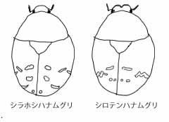 f:id:tamayoshi:20170616224002j:plain