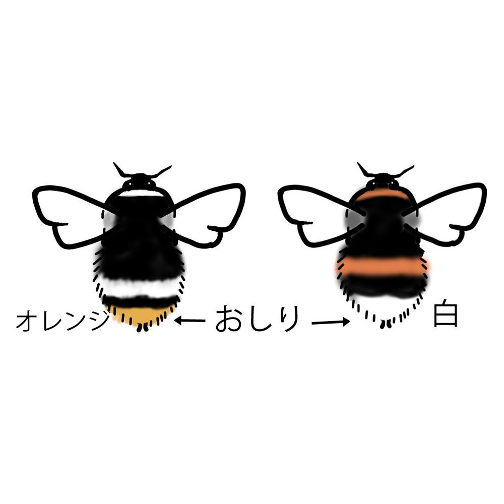 f:id:tamayoshi:20210724154305j:plain