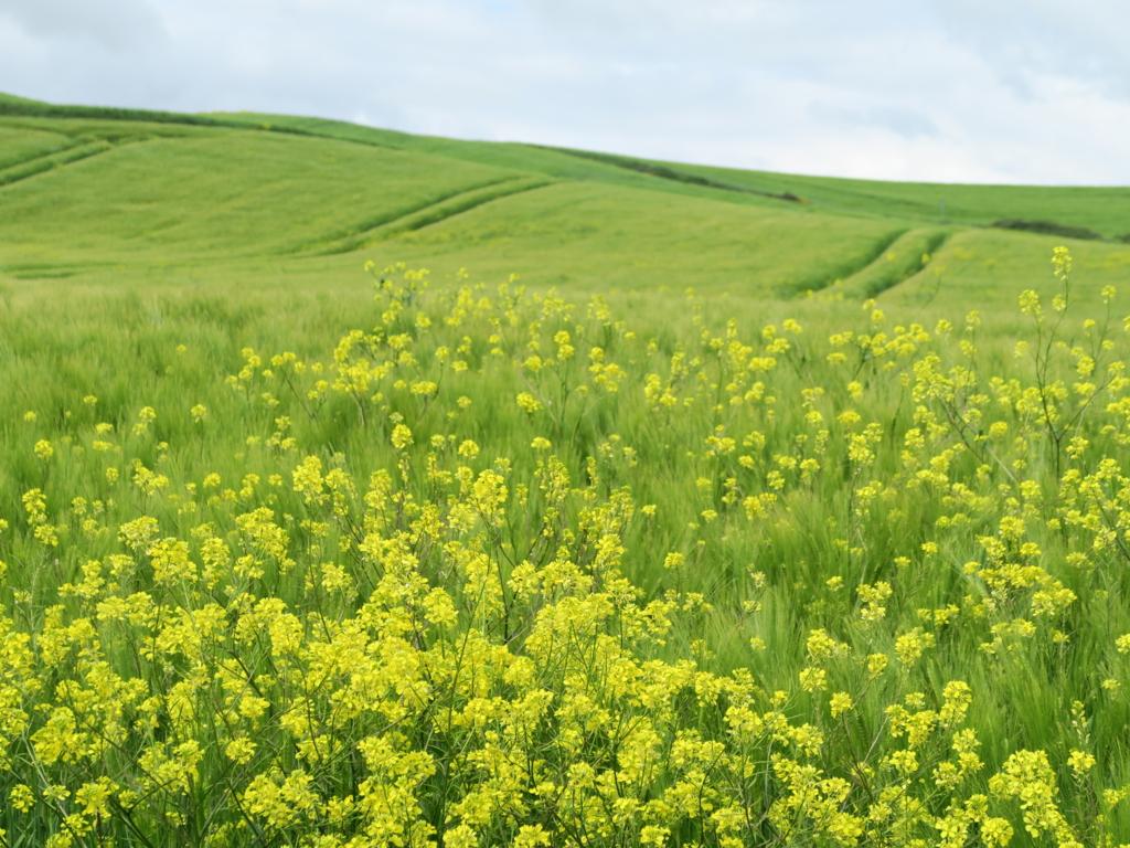 5月のスペイン巡礼で見つけた、色とりどりの野の花図鑑