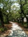 四ツ谷の並木道