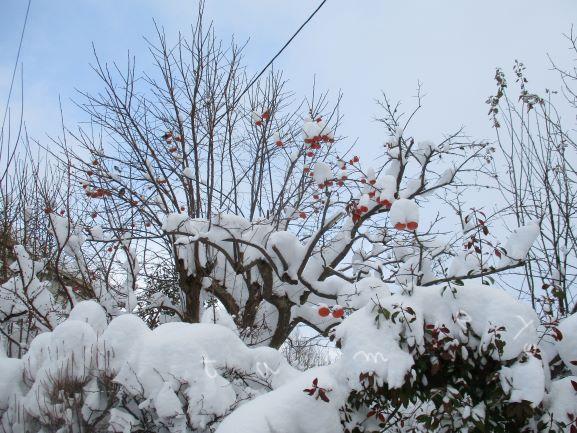 地震・雪害