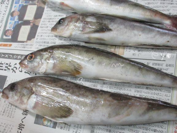 鮮魚・ホッケ・魚料理
