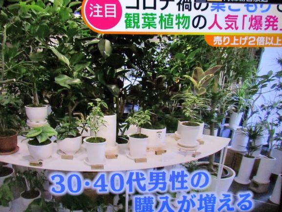 観葉植物が人気