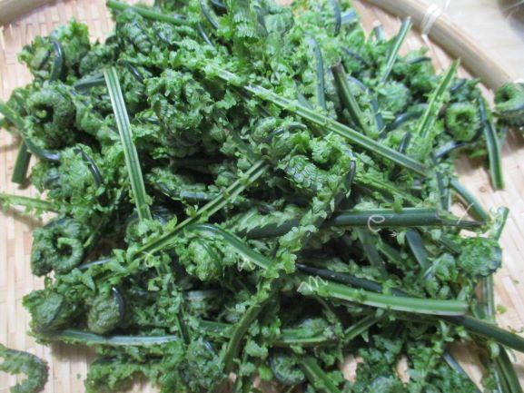 コゴミ・山菜