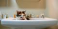 洗面台のマル