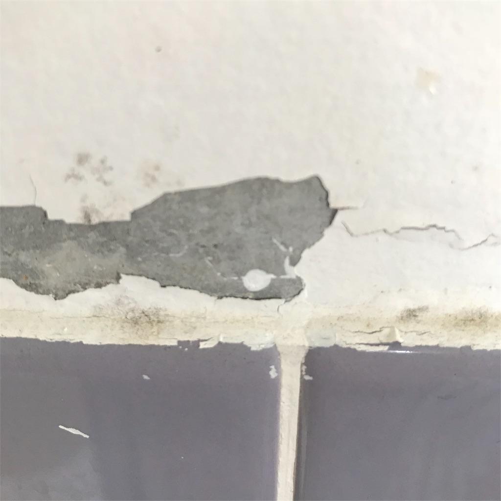プチdiyしてみた 浴室の壁ペンキ塗り編 つーる ど 日常茶飯事
