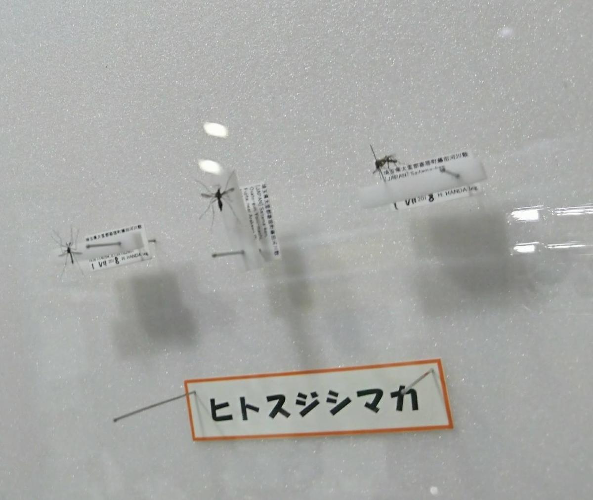 f:id:tanabetan:20190510003548j:plain