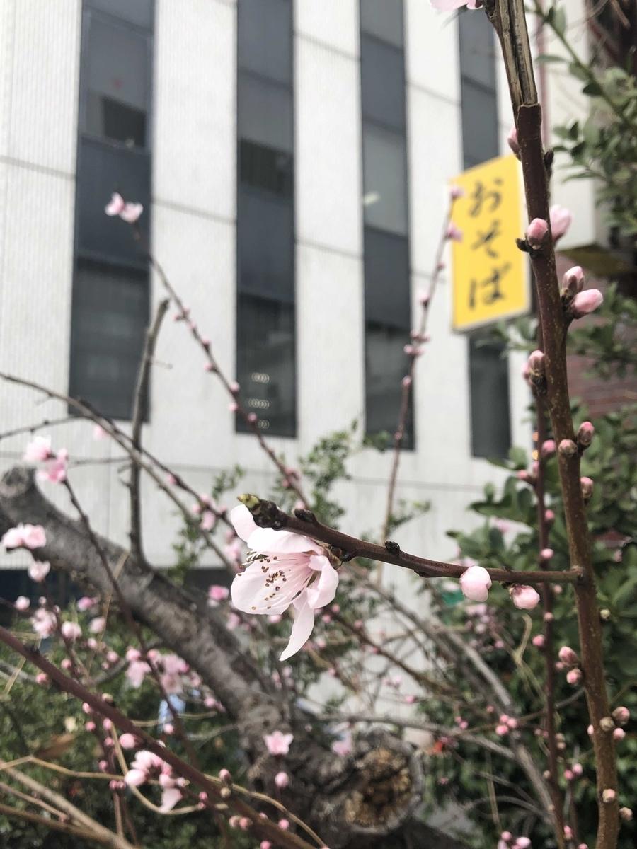 f:id:tanaka-B-toshihiko:20190322150120j:plain