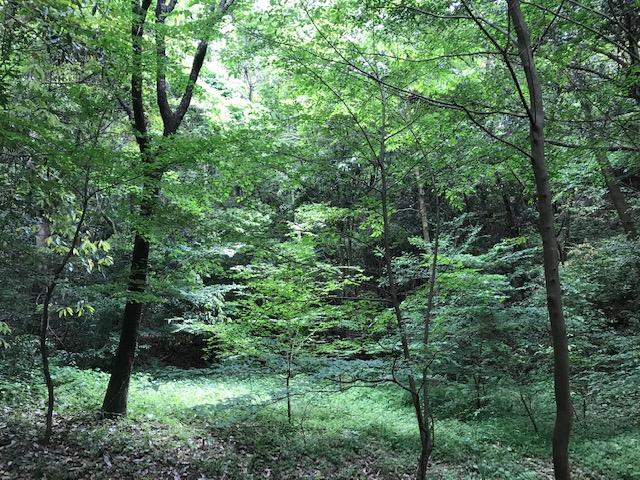 f:id:tanaka-shinichi:20200521182546j:plain