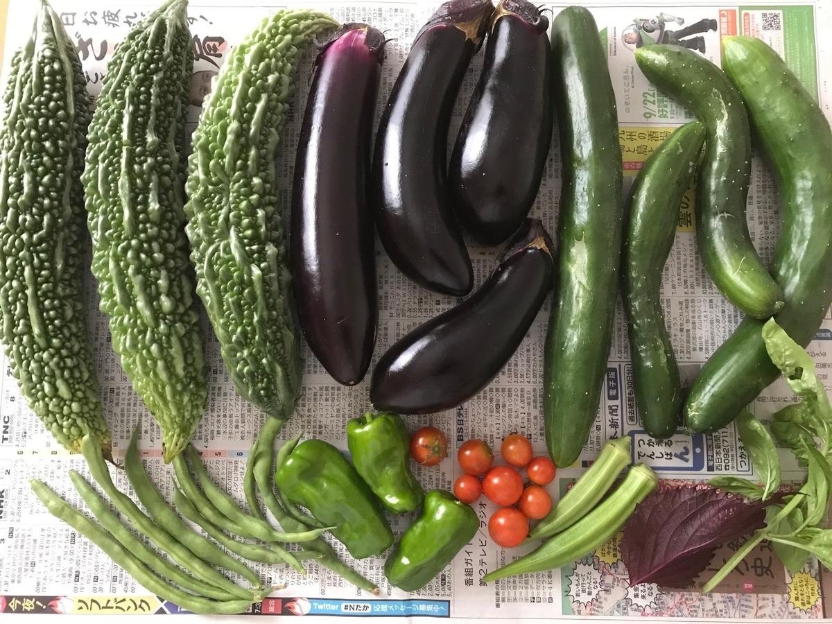 家庭菜園で収穫した野菜