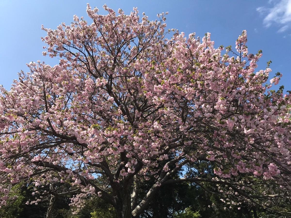 f:id:tanaka-shinichi:20210408174353j:plain