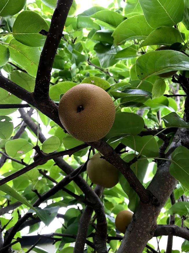 ぶどうの樹 杜の七種
