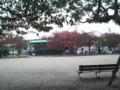 木の葉は緑