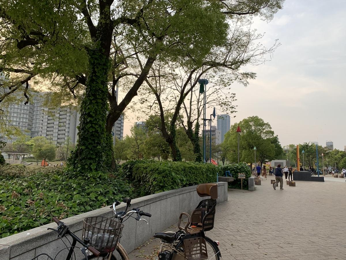 扇公園の樹木 乳がん予防講座の前に散策