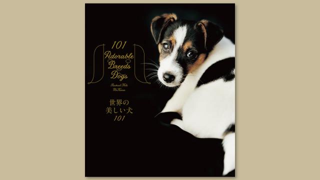 f:id:tanazashi:20170808173050j:plain