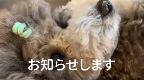 f:id:tanegashimapi:20210418124512j:plain